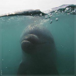 delfino a rimini